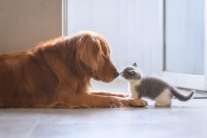 A cat and a dog.